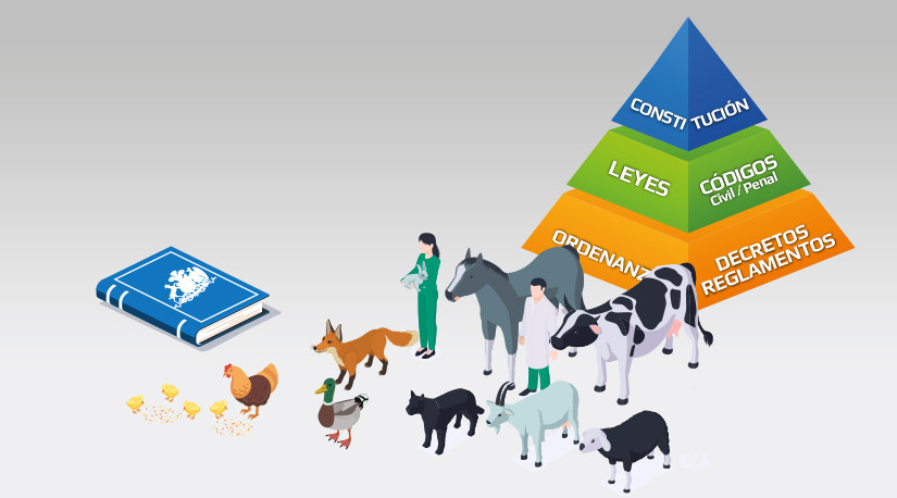 Conceptos claves sobre sintiencia animal y bases jurídicas para su inclusión en la nueva Constitución