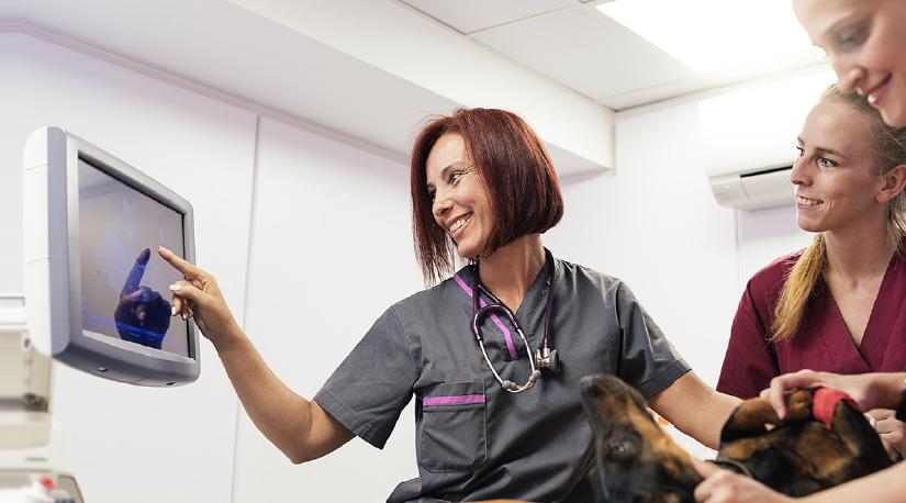Cómo potenciar talentos veterinarios y formar equipos felices