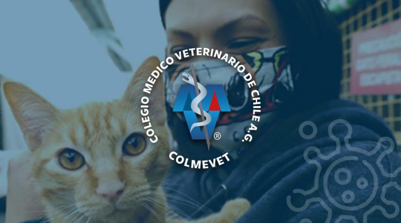 Comunicado Comisión Una Salud-Colmevet: Contagio de Covid en gatos sería solo desde personas