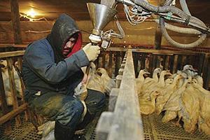 Modifican Reglamento sobre Normas para Higiene de Alimentos de Origen Animal