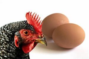 Científicos Resolvieron qué fue Primero: ¿El Huevo o la Gallina?
