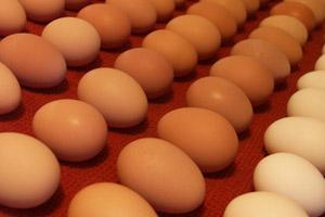 EE.UU.: retiran 500 millones de huevos del mercado