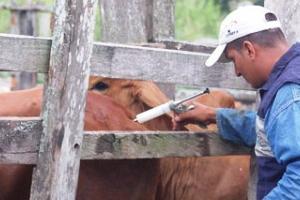 Vacunas Contra la Aftosa y la Brucelosis en Chaco y Formosa