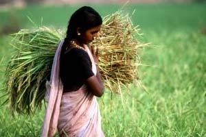 """LA FAO Propone una Agricultura """"Inteligente"""" con Respecto al Clima"""