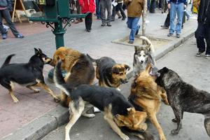 Ministerio de Salud pide Asumir el Control de Perros Peligrosos