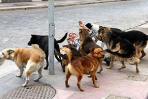 Universidad de Chile Presenta Vacuna para Control de la Natalidad en Animales
