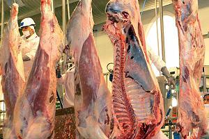 Auditorías a Mataderos: Problemas Compartidos
