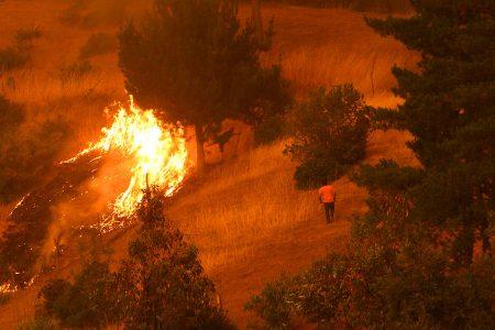Operativos del Colegio Médico Veterinario ante Múltiples Incendios que Afectan al País