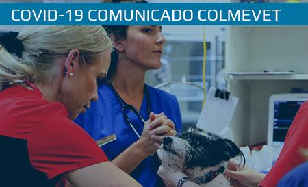 Habilitación de código para obtener Permiso Único Colectivo, para médicos veterinarios independientes y con inicio de actividades en SII