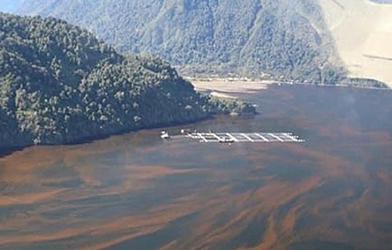 Colmevet Chiloé exige maximizar esfuerzos para eliminar remanentes de mortalidad de salmones y generar medidas correctivas