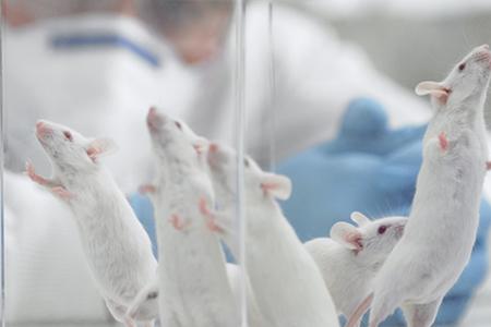 Nueva Reunión del Comité de Bioética Animal