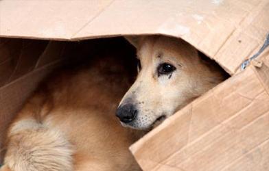 Colmevet logra salida alternativa en proceso penal por abandono animal en una clínica veterinaria de Rancagua