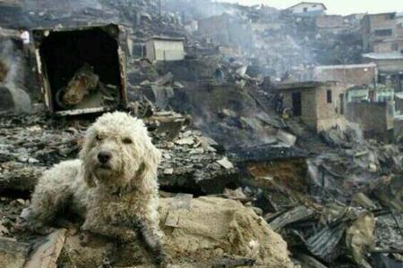 Ayuda para Animales Víctimas de los Incendios