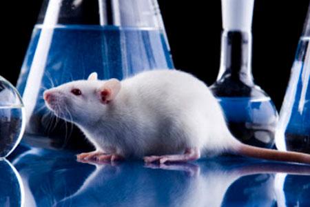 Creación de Comisión Permanente de Bioética Animal