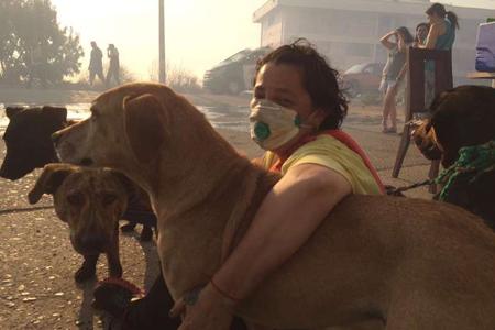 Ayuda a los Animales Afectados por el Incendio de Valparaíso