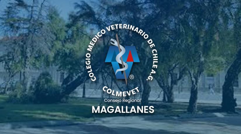 Alerta por frente de mal tiempo: Colmevet Magallanes hace llamado a resguardar a las mascotas