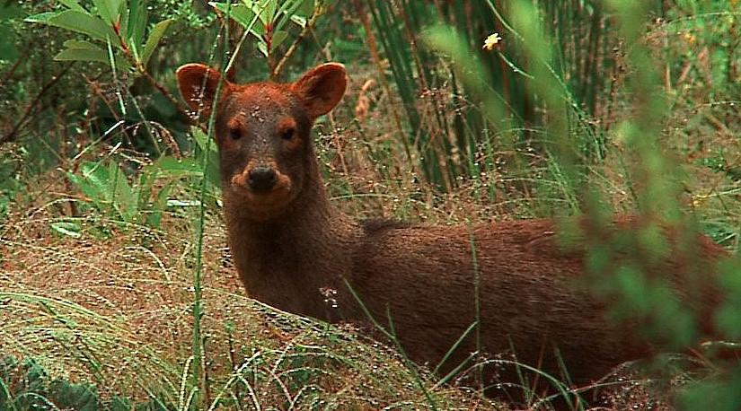 Nace Comisión Nacional de Fauna Silvestre y Medio Ambiente de Colmevet